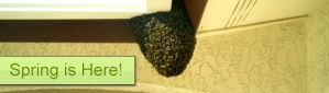 Spring Pest Control Tips